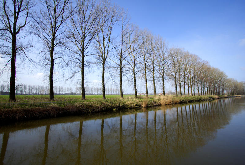 Riga di alberi fotografie stock