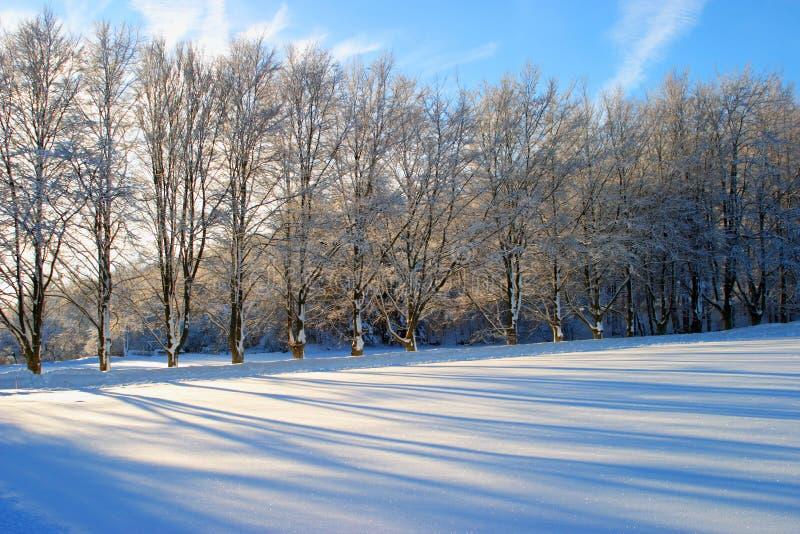 Riga di albero fotografia stock libera da diritti