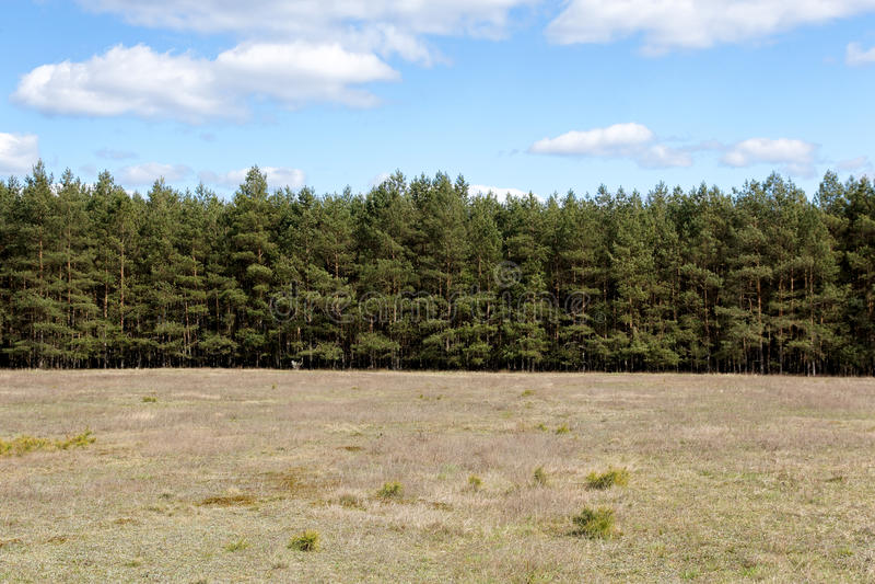 Riga di albero al prato fotografie stock