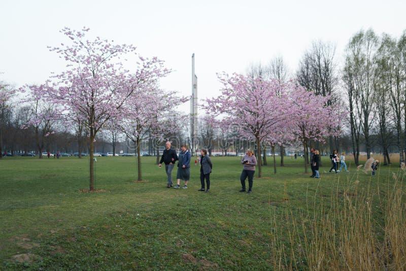 RIGA, LET?NIA - 24 DE ABRIL DE 2019: Povos no parque da vit?ria que apreciam a flor de cerejeira de sakura - canal da cidade com  imagem de stock