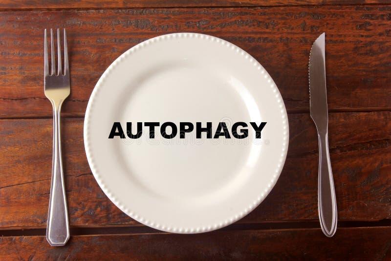 Rigenerazione trattata delle cellule di Autophagy nel corpo, riducente la probabilità dell'inizio di alcune malattie, oltre ad au fotografie stock libere da diritti