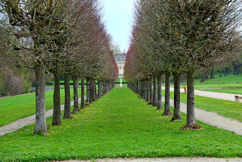 Righe di alberi fotografia stock