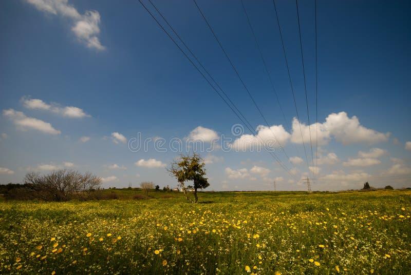 Righe di energia elettrica che passano attraverso il prato di stordimento fotografie stock