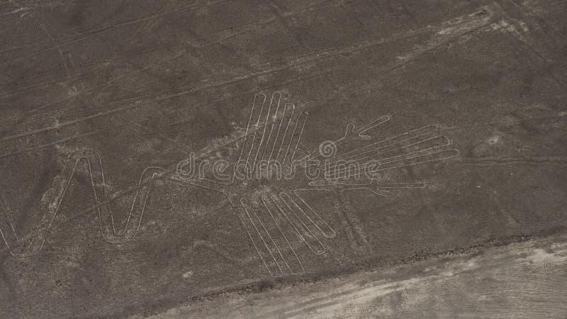 Righe di Nazca immagini stock libere da diritti