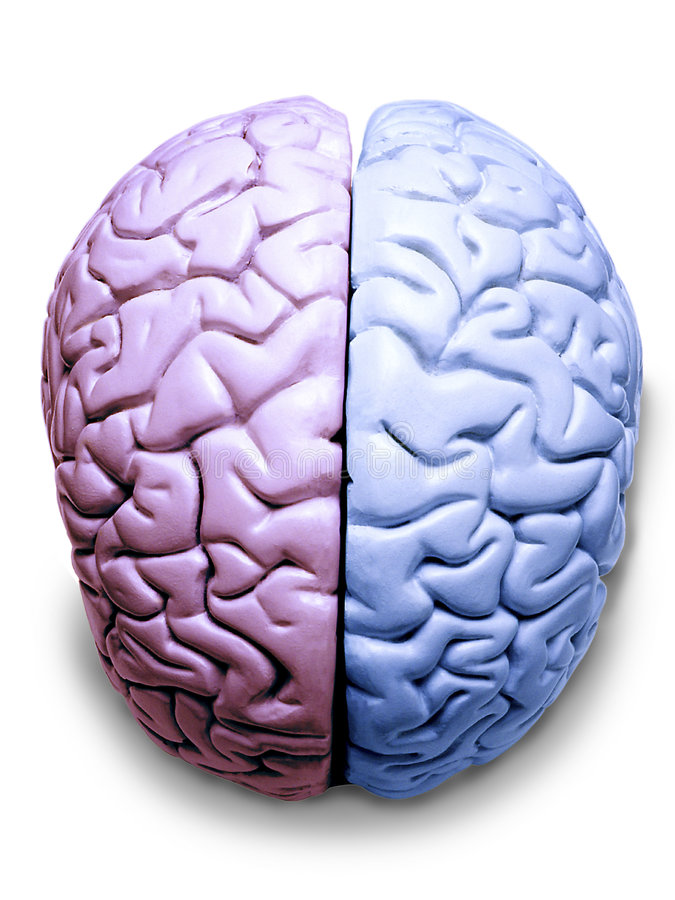 LGBT Transgender Brain Gay Lesbian stock photos