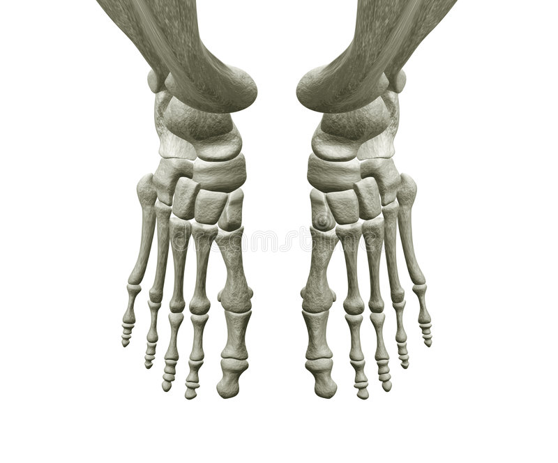Right and Left Foot Bones stock illustration. Illustration ...
