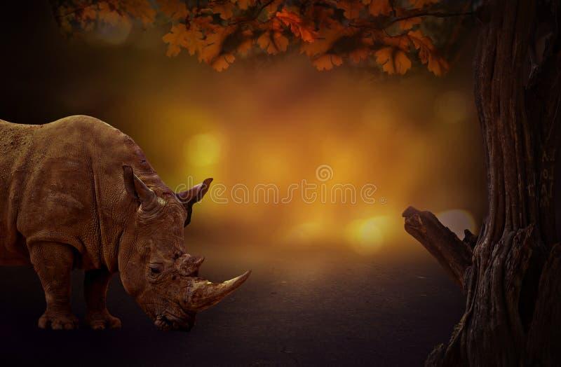 Rihno contra o fundo escuro sonhador da árvore nas madeiras imagens de stock royalty free