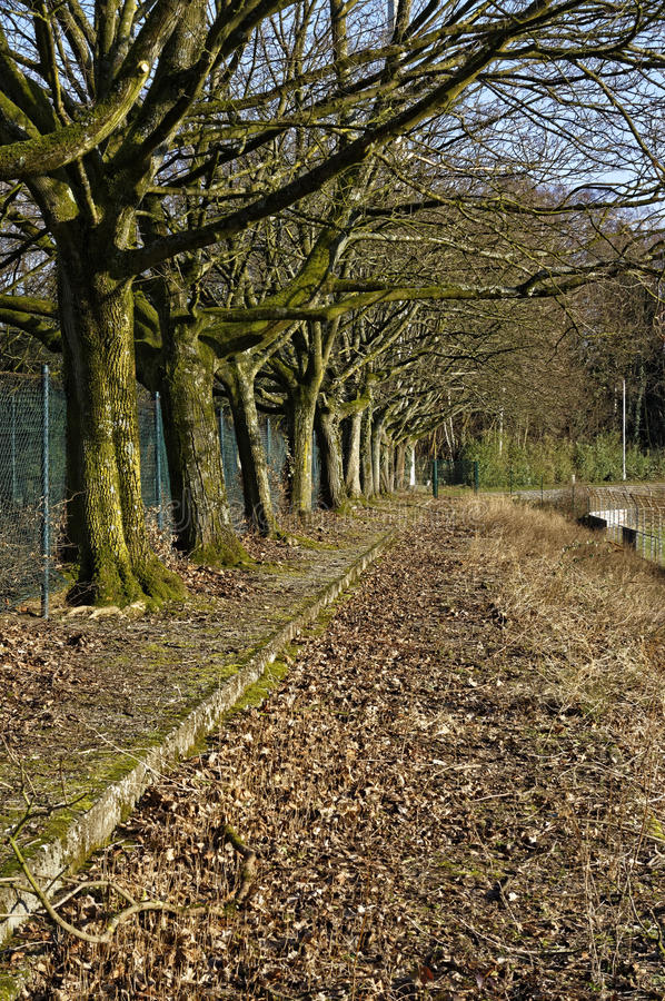 Rij van bomen royalty-vrije stock foto