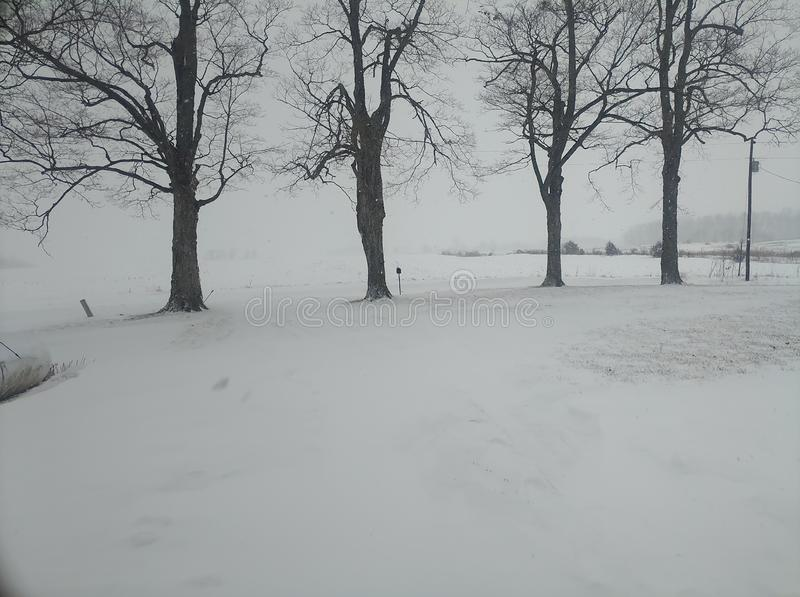 Rij van bomen tijdens sneeuwstorm stock foto's