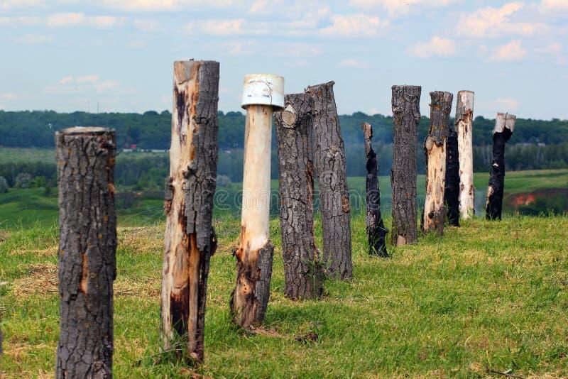 Rij van boomboomstammen als houten polenomheining stock foto