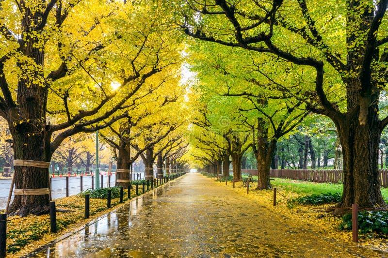 Rij van gele ginkgoboom in de herfst De herfstpark in Tokyo, Japan royalty-vrije stock afbeelding