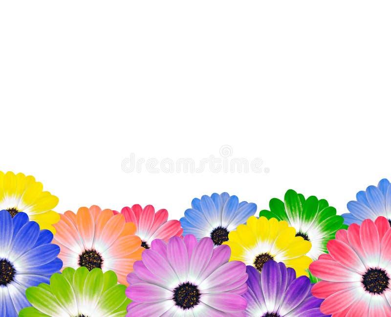 Rij van Kleurrijke Daisy Flowers op Wit vector illustratie
