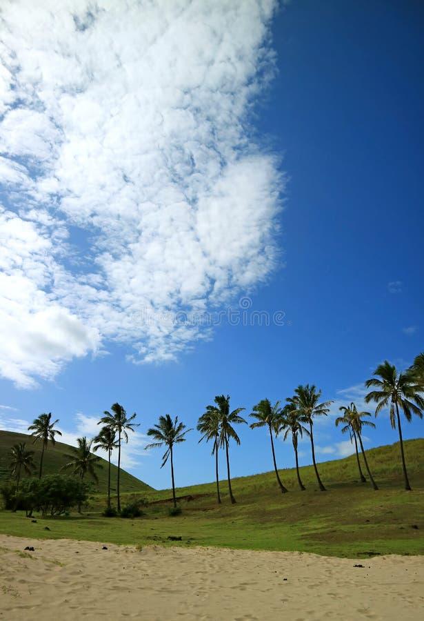 Rij van Kokosnotenpalmen tegen Levendige Blauwe Hemel en Zuivere Witte Wolken, Anakena-strand, Pasen-eiland, Chili stock foto's