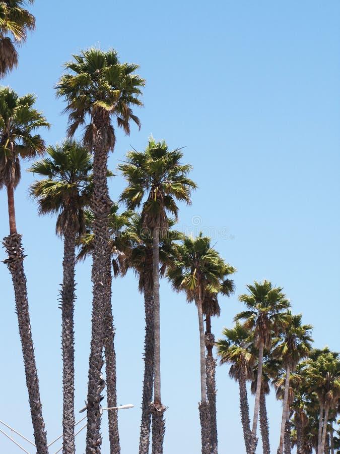 Rij van palmen royalty-vrije stock fotografie