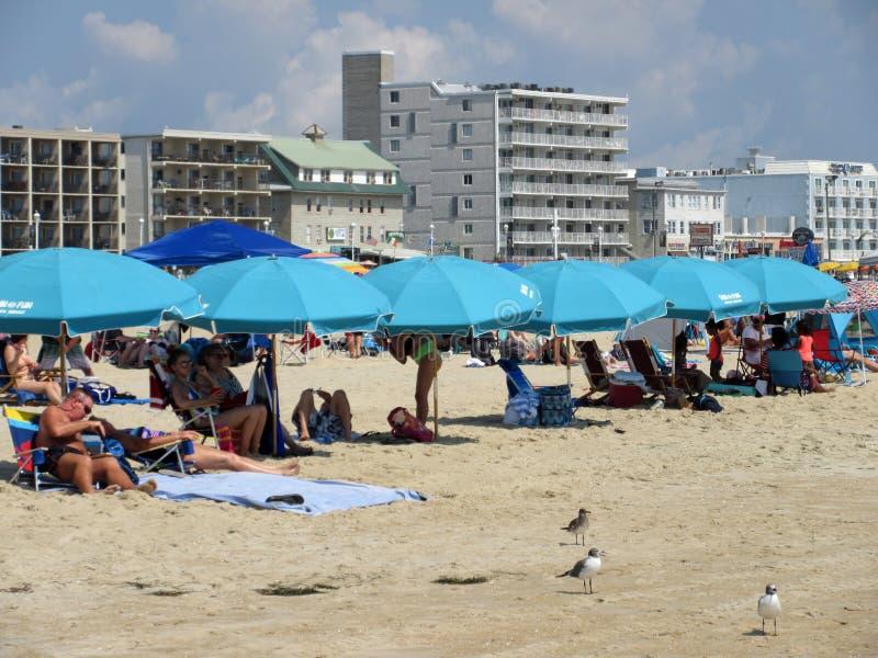 Rij van Paraplu's bij het Strand royalty-vrije stock afbeeldingen