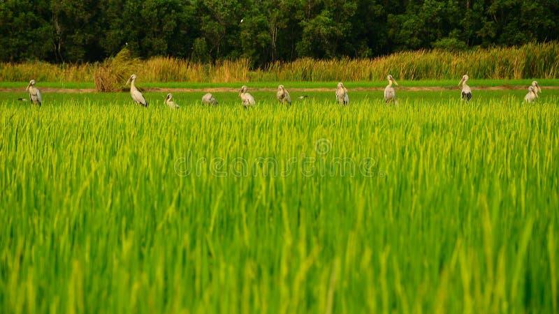 Rij van vogels royalty-vrije stock foto
