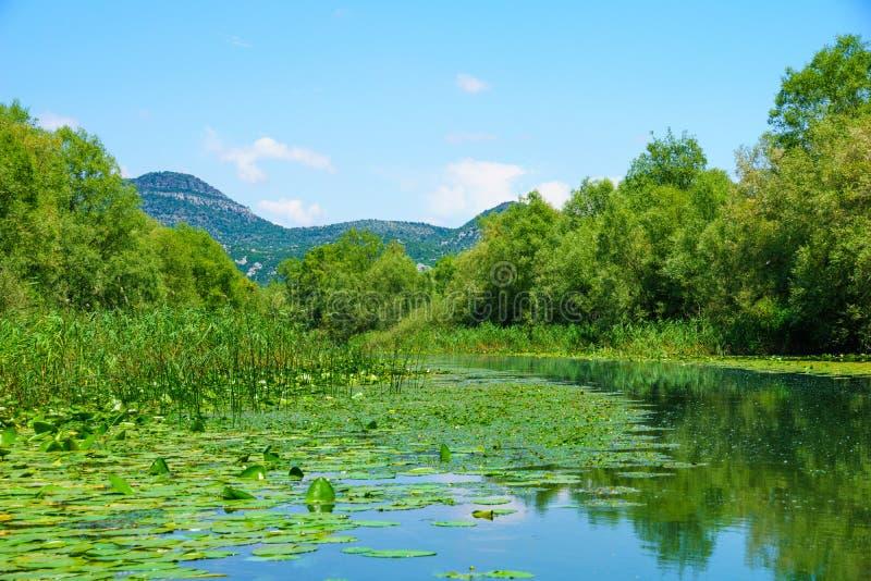 Rijeka Crnojevica, lago Skadar fotografie stock
