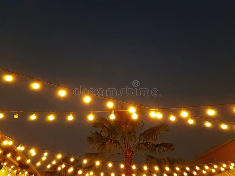 Rijen van Verlichte Hangende Gloeilampen met Palm in de Rug bij Nacht stock fotografie