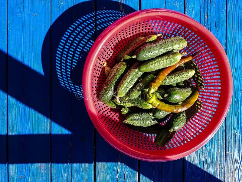Rijke oogst van komkommers royalty-vrije stock fotografie