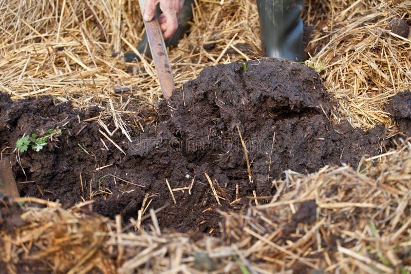 Rijke organische muls van mest en stro stock afbeeldingen