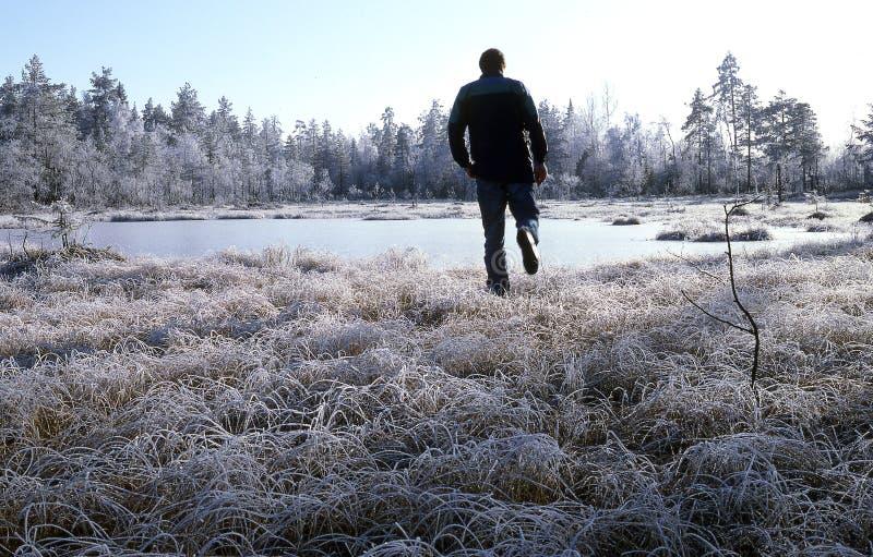 Download Rijp stock foto. Afbeelding bestaande uit sneeuw, bomen - 291714