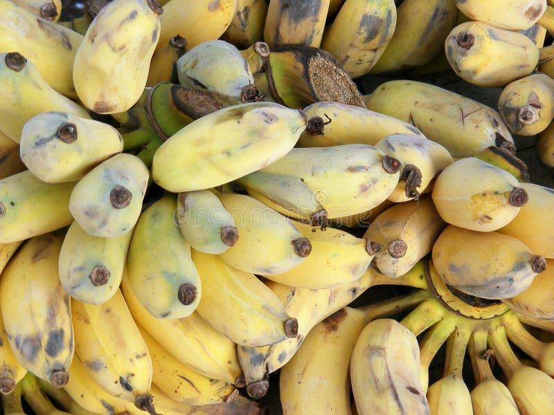 Rijp bananen royalty-vrije stock foto's