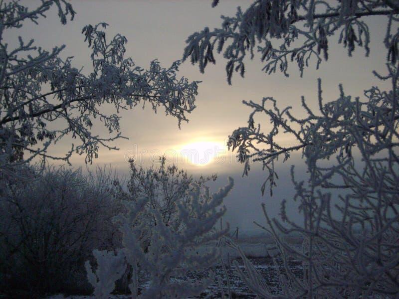 Rijp bij zonsopgang stock fotografie