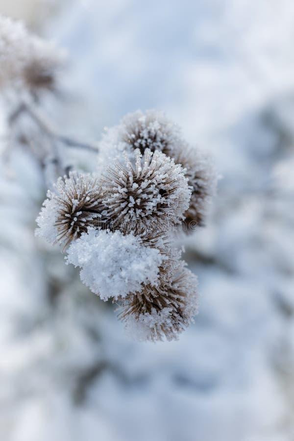 Rijp en sneeuw stock fotografie
