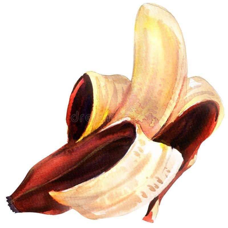 Rijp enig fruit, half gepelde rode open geïsoleerde banaan, waterverfillustratie op wit royalty-vrije illustratie