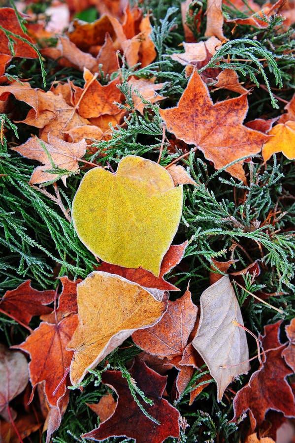 Rijp op de herfstbladeren stock afbeelding