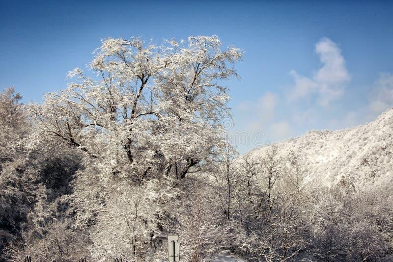Rijp op takken van een boom stock afbeelding