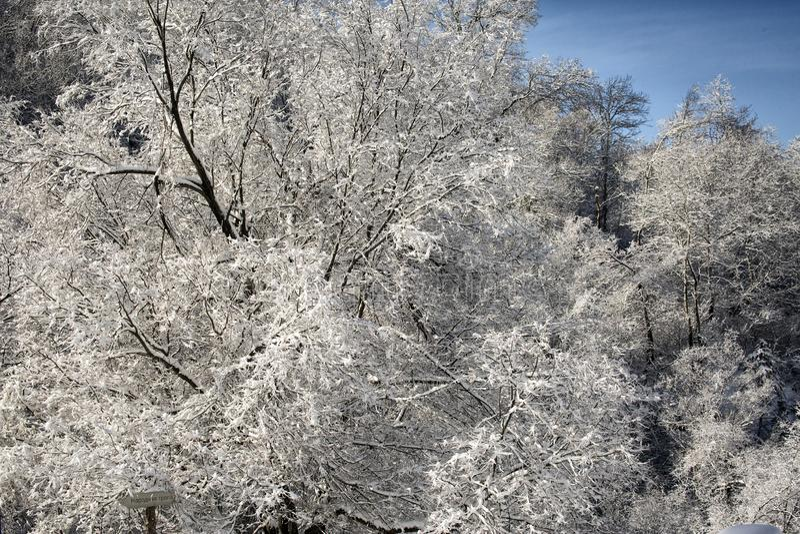 Rijp op takken van een boom royalty-vrije stock fotografie