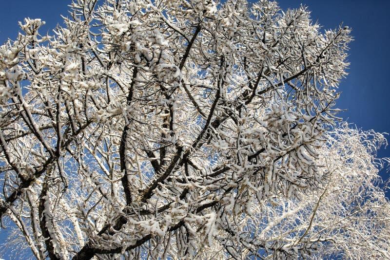 Rijp op takken van een boom stock fotografie