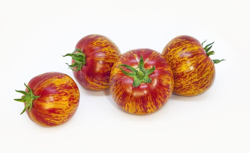 Rijpe bont vier tomaten met ongebruikelijk natuurlijk patroon Mooie ongebruikelijke tomaten met groene staarten royalty-vrije stock afbeelding