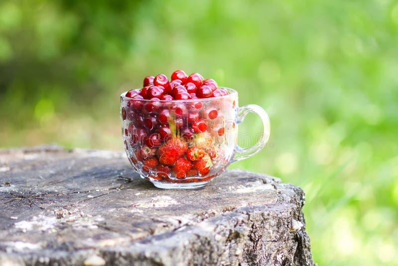 Rijpe cherriesandaardbeien in een glaskop op boomstomp Verse rode kersenvruchten in de zomertuin in het platteland royalty-vrije stock afbeelding