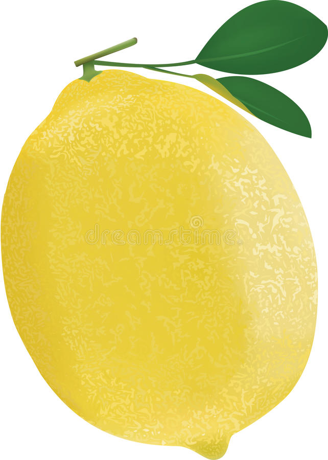Rijpe citroen stock afbeelding