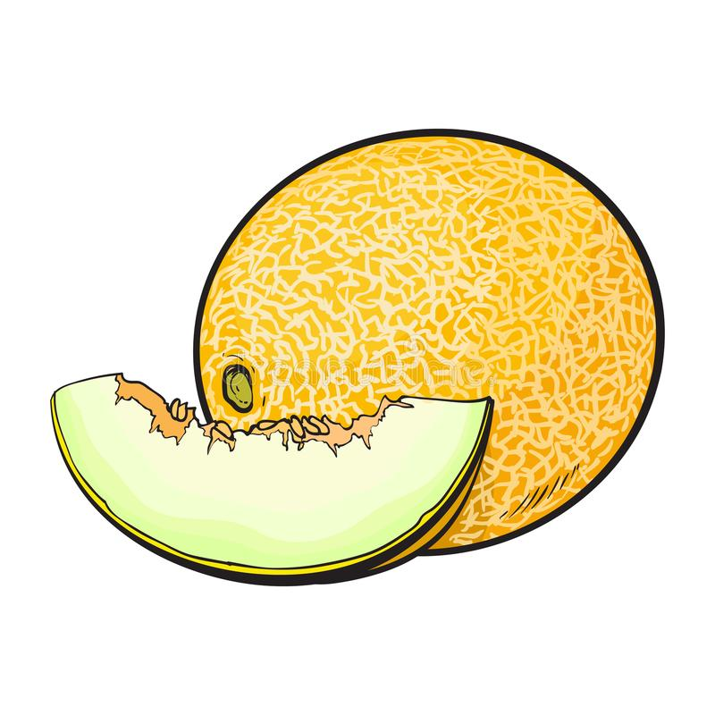Rijpe en sappige gele meloen die op witte achtergrond wordt geïsoleerd stock illustratie
