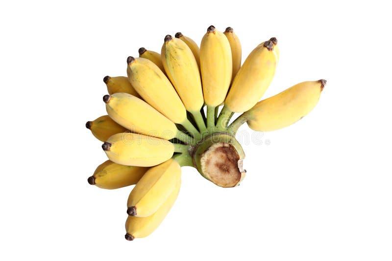 Rijpe gecultiveerde geïsoleerde banaan. stock fotografie
