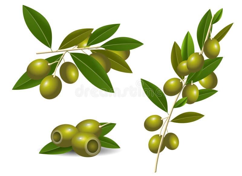 Rijpe groene olijven royalty-vrije illustratie