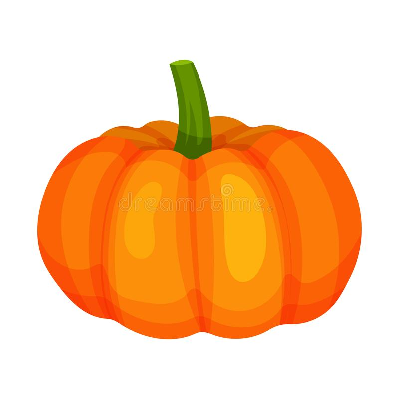 Rijpe heldere oranje pompoen Natuurlijk en gezond voedsel Organisch landbouwproduct Ingrediënt voor vegetarische schotel beeldver vector illustratie