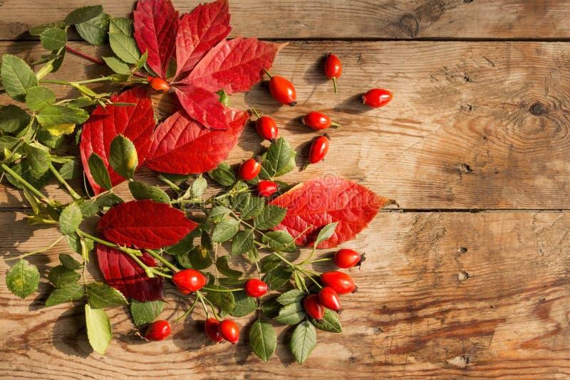 Rijpe hond-roze vruchten met rode en groene bladeren op een oude houten lijst stock foto