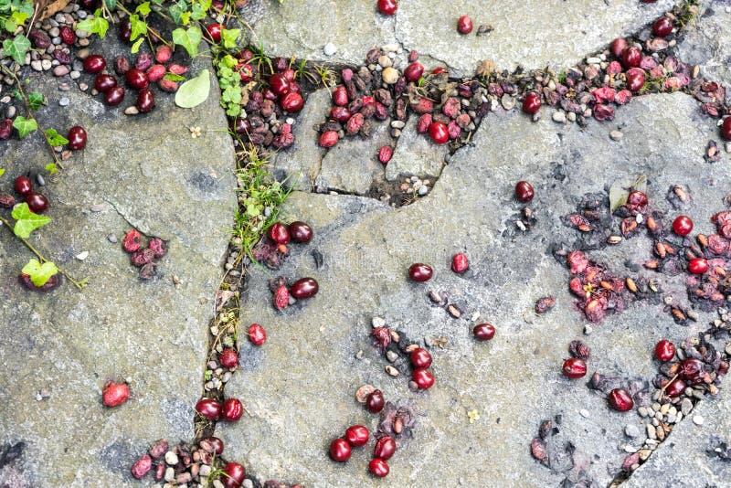 Rijpe kers die op concrete straat liggen royalty-vrije stock fotografie