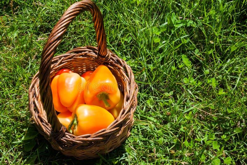 Rijpe oranjegele plantaardige peper in een mand op groene grasachtergrond stock afbeeldingen