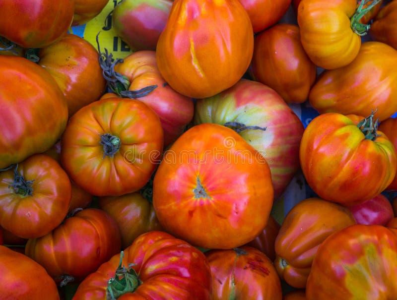 Rijpe organische die tomaten in een serre worden gekweekt, in een doos wordt verzameld stock foto's
