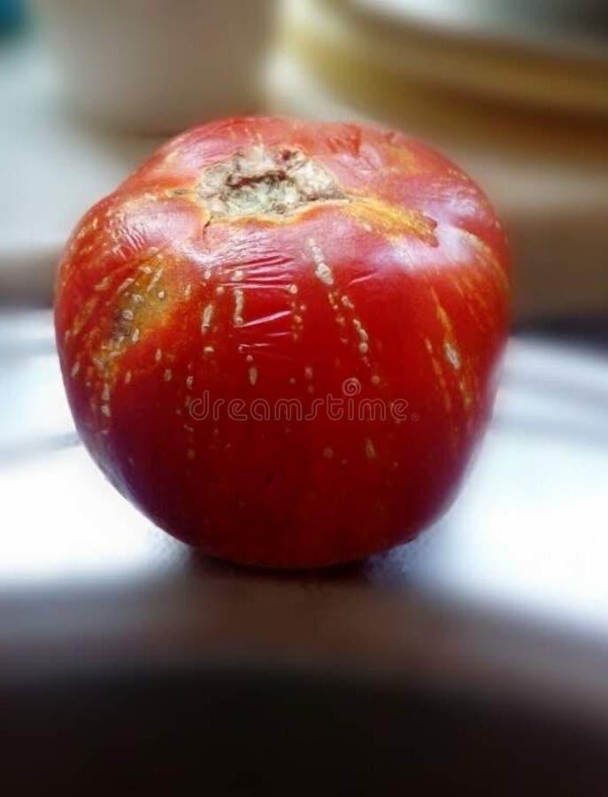 Rijpe organische tomaten, natuurlijk fruit, rode tomaten met gele vlekken, vers product stock foto