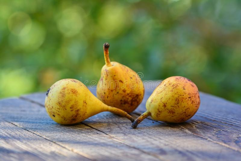 Rijpe peren stock afbeelding