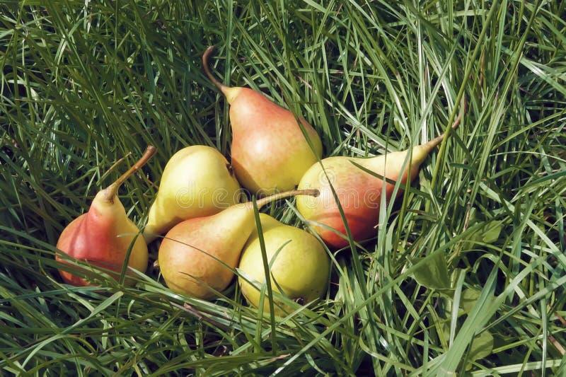 Rijpe peren in het gras stock afbeeldingen