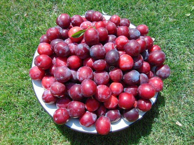 Rijpe pruimen op een de zomerdag stock foto's