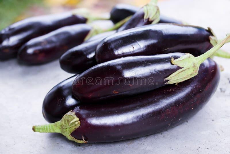 Rijpe purpere aubergine stock afbeeldingen