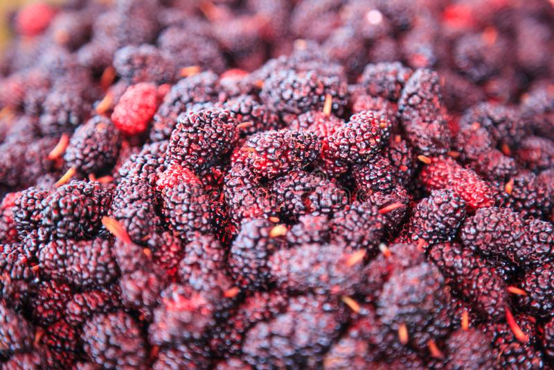 Rijpe rode en donkere purpere zoete het fruitachtergrond van de aromamoerbeiboom De gezondheidsvoordelen van moerbeibomen omvatte royalty-vrije stock foto's